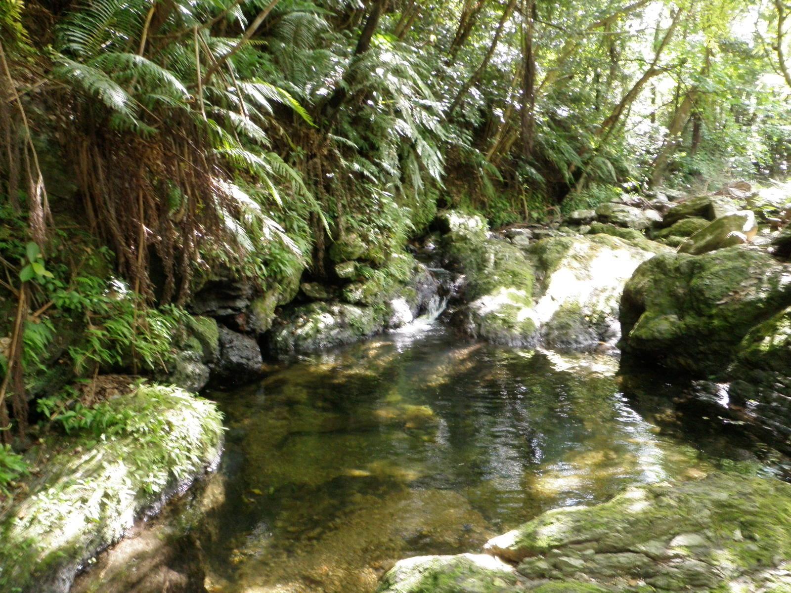 ジャングルリバートレッキング:名護市の観光・旅行