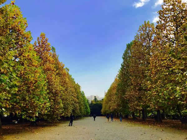 新宿御苑 紅葉 銀杏並木