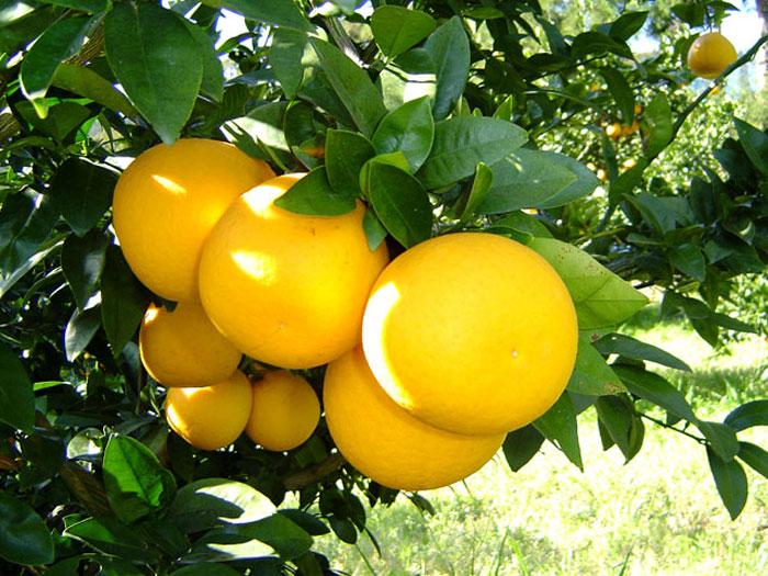 ダイエットに効果的!?グレープフルーツの驚くべき美容効果とは?